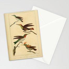 080-Petit Oiseau mouche, Rubis-topaze, Rubis, Huppe-col2 Stationery Cards