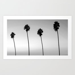 Black and White San Diego Palms - California Art Print