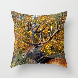 Red Deer Resting Throw Pillow