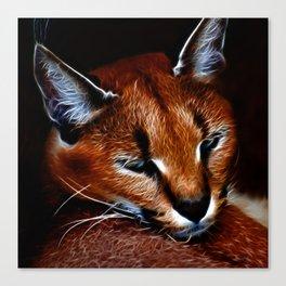 Karakul wildcat Canvas Print