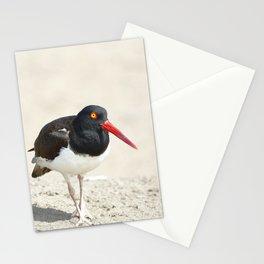 Common Oystercatcher (Haematopus palliatus) Stationery Cards