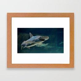 Hammerhead Framed Art Print