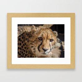 The Look - Cheetah eyes Framed Art Print