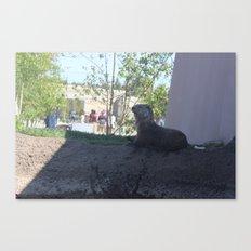 :O Otter Canvas Print