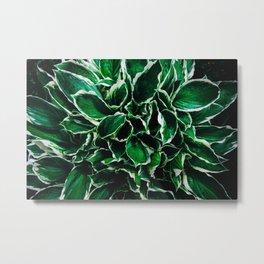Hosta undulata albomarginata vibrant green plant leaves Metal Print