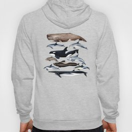 Atlantic whales, dolphins and orca Hoody