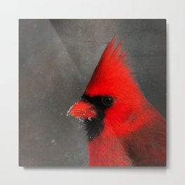 MALE CARDINAL - WINTER WILDLIFE Metal Print