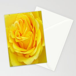Beautiful Yellow Rose Closeup Stationery Cards