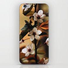 Cherry Blossom 3 iPhone & iPod Skin
