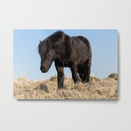 horse by Andre Mouton Metal Print