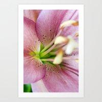 Pink Lily Flower Art Print