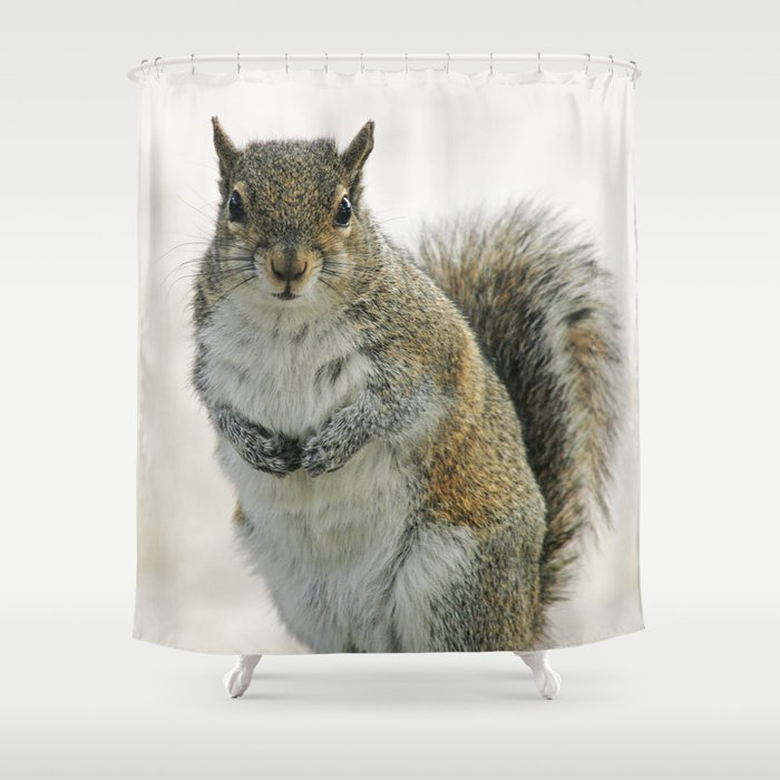 Gray Squirrel Shower Curtain By Cindiresslerphotography