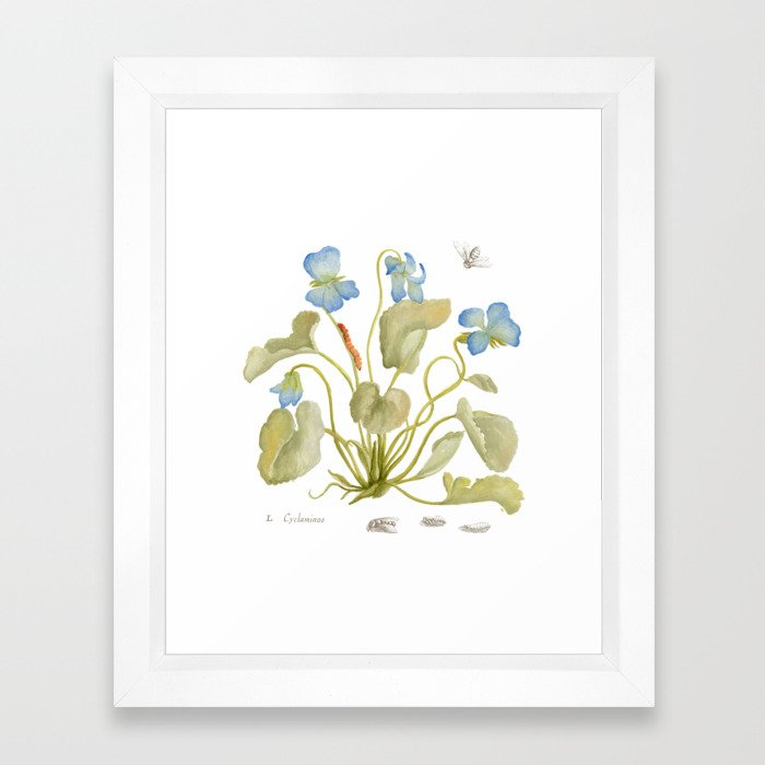 Cyclamen Botanical Watercolor Framed Art Print