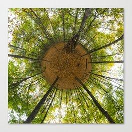 Le bois de Vincennes à l'automne // The forest of Vincennes in autumn Canvas Print