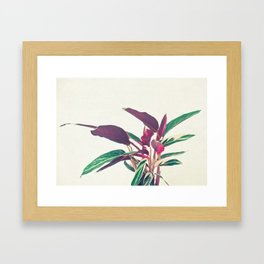 Prayer Plant II Framed Art Print