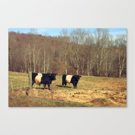 Two Oreo Cows on the Hill, Staring at You Canvas Print