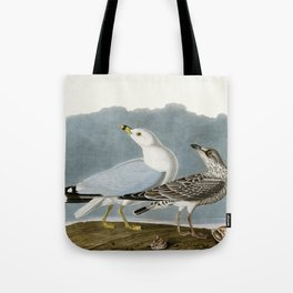 Vintage Seagull Illustration - Audubon Tote Bag