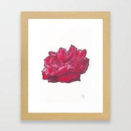 Red Rose 2 Framed Art Print