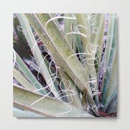 Desert plant Metal Print