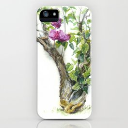 old blooming lilac bush, watercolor sketch from nature iPhone Case