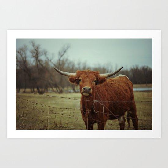 Longhorn #2 Art Print