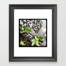 Water, leaves, and the reflection of trees. Framed Art Print