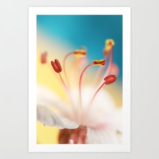 Geranium Against Blue Art Print