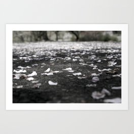 Black and White Flower Petals on Pavement Road Photograph Art Print