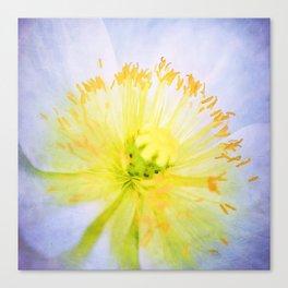 Poppy Close Up Canvas Print