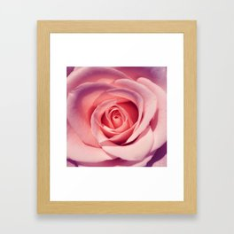 rose macro I Framed Art Print