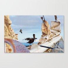 Bowsprit Pelicans Canvas Print