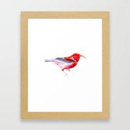 Iwi Bird Framed Art Print