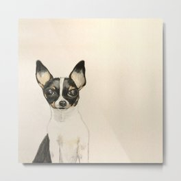 Chihuahua - the tiny dog Metal Print