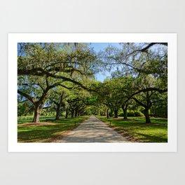 The Avenue of Oaks Art Print