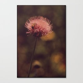 flower, honey Canvas Print