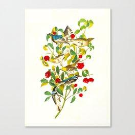 Vintage Scientific Bird & Botanical Illustration Canvas Print
