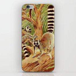 Kuhnert, Friedrich Wilhelm (1865-1926) - Wild Life of the World 1916 v.3 (Ring-tailed Lemur) iPhone Skin