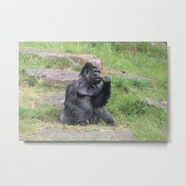 Gorilla Eating A Carrot Metal Print