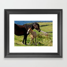 Horses In Landscape Framed Art Print
