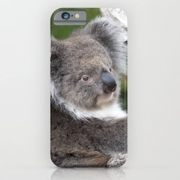 Portrait of a Koala iPhone Case