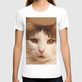Ragamuffin Cat Portrait T-shirt