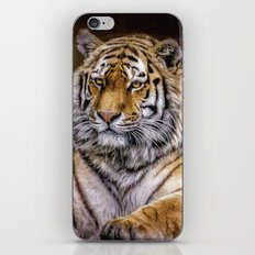 Majestic Tiger iPhone & iPod Skin