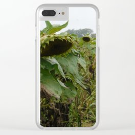 Sullen Sunflowers Clear iPhone Case