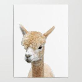 Fawn Alpaca Poster