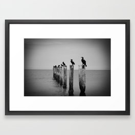 Black and White birds on a post photography Framed Art Print