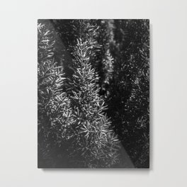 closeup spiky succulent plant in black and white Metal Print