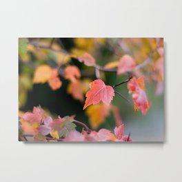 Autumn Red Metal Print