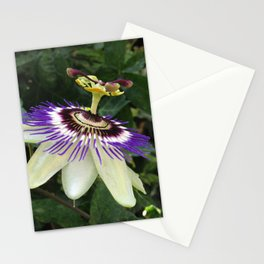 Passionfruit Flower Stationery Cards