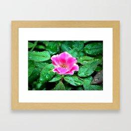 Pink Flower in the Rain Framed Art Print