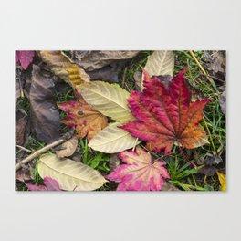 Leaf it out Canvas Print